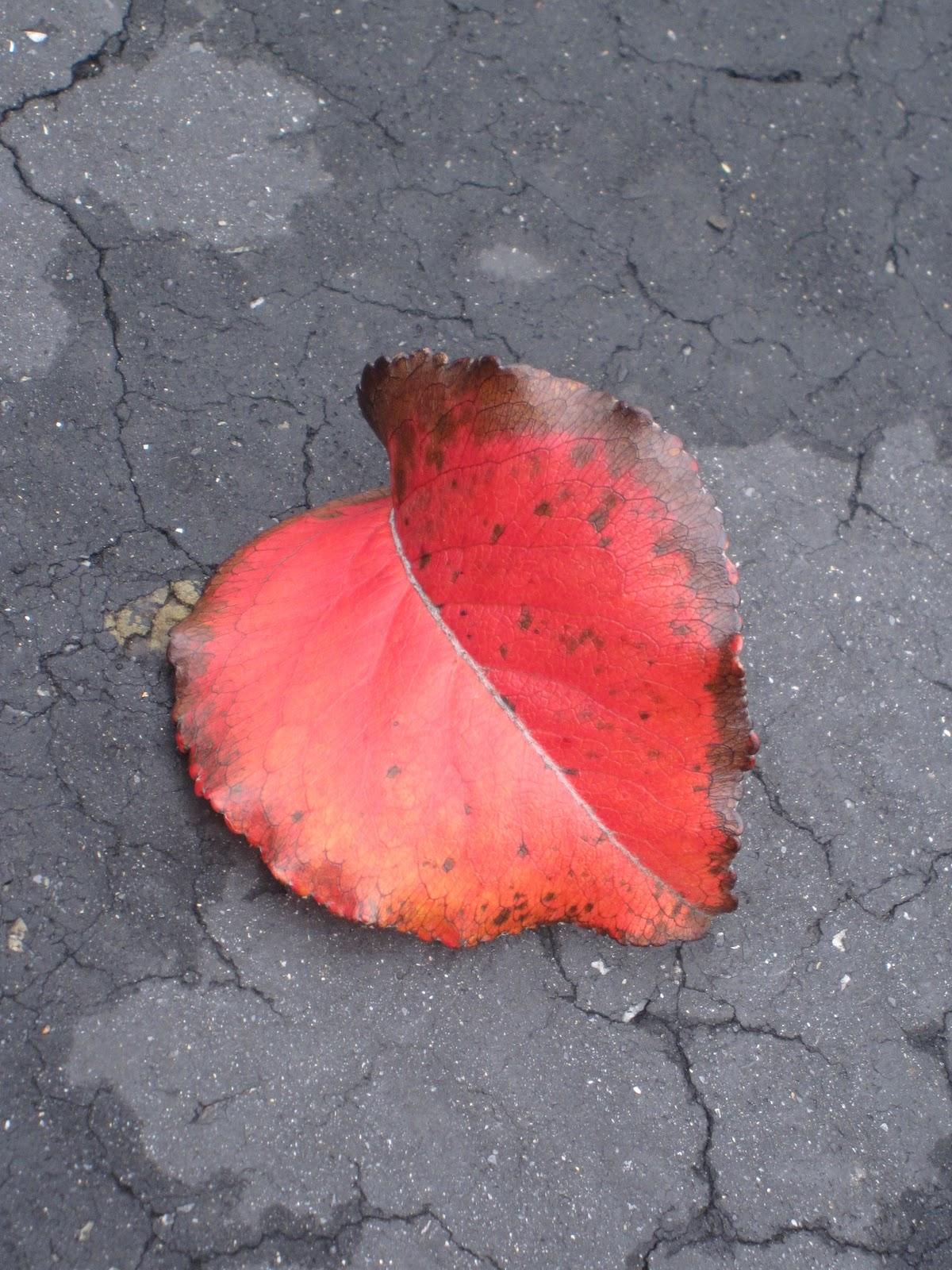 Silver Leaf Dipped San Francisco Treasure Island
