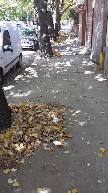 Autumn Leaves, Gathered, Yambol,