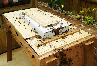 Beekeeping nucleus Top Bar Hive TBH