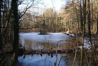 Ein kleiner, halb zugefrorener See in einem Wald