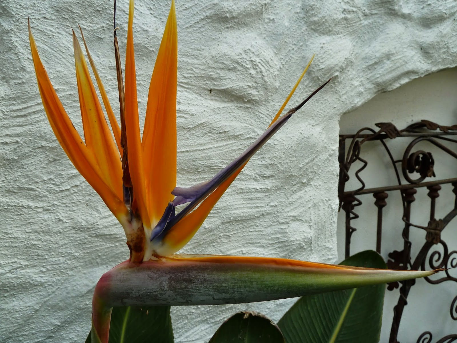Bird of Paradise Eden Project
