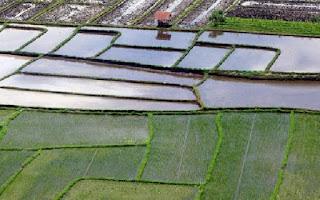 Mampu Realisasikan Cetak Sawah 100 Hektar