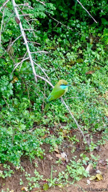 Bird at Yala National Park!