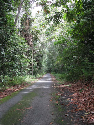The road leading immediatedly to the foot of the rainforest flanked on both sides by secondary jungle the left over after all the valuable forest trees were logged