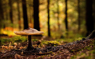 Mushroom in Forest wallpaper