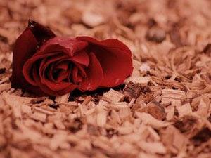 Unduh 78 Gambar Bunga Gugur Paling Bagus Gratis