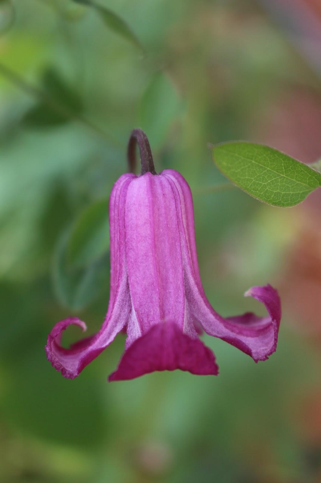 Notre jardin secret for Promesse de fleurs