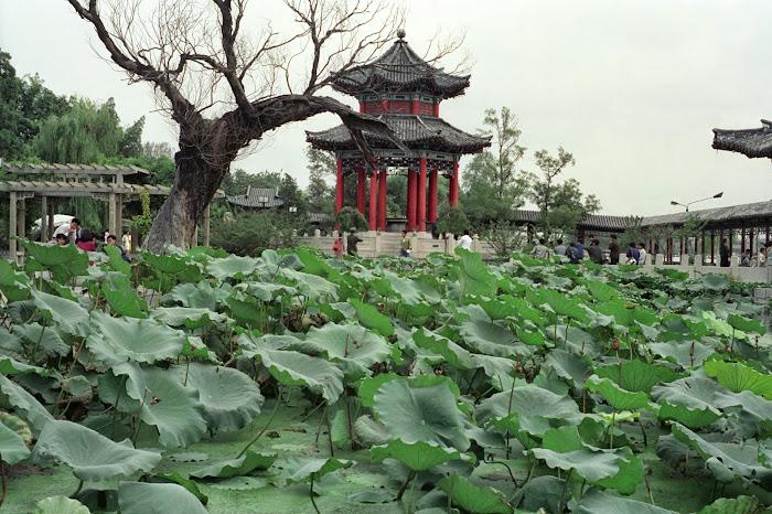 Nankin, Parc Mochou, © L. Gigout, 1990