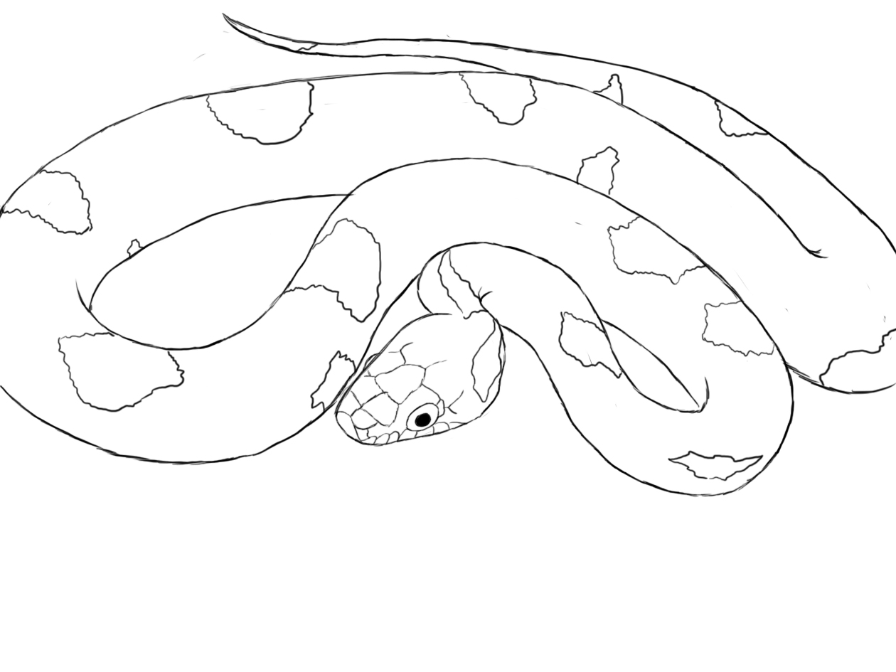 Line Drawing Snake : How to draw a snake central