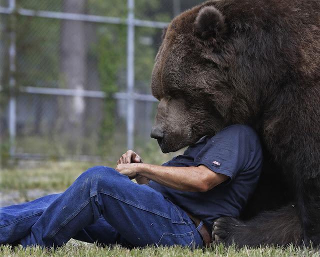 Джим Ковальчик играет со своим другом - 700-килограмовом медведем гризли