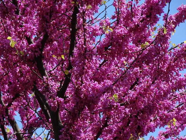 avril, jardin fébrile - Page 7 DSC07096