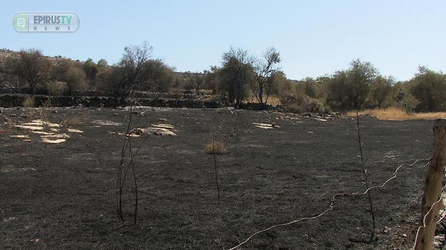 Γιάννενα: Ασβεστοχώρι - ποκαρδιωτικά Τοπία..Μετά Τη Φωτιά ... [Εικόνες]