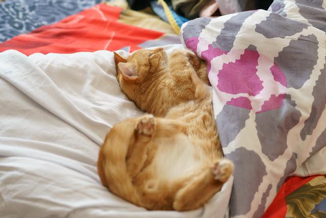 рыжий кот спит