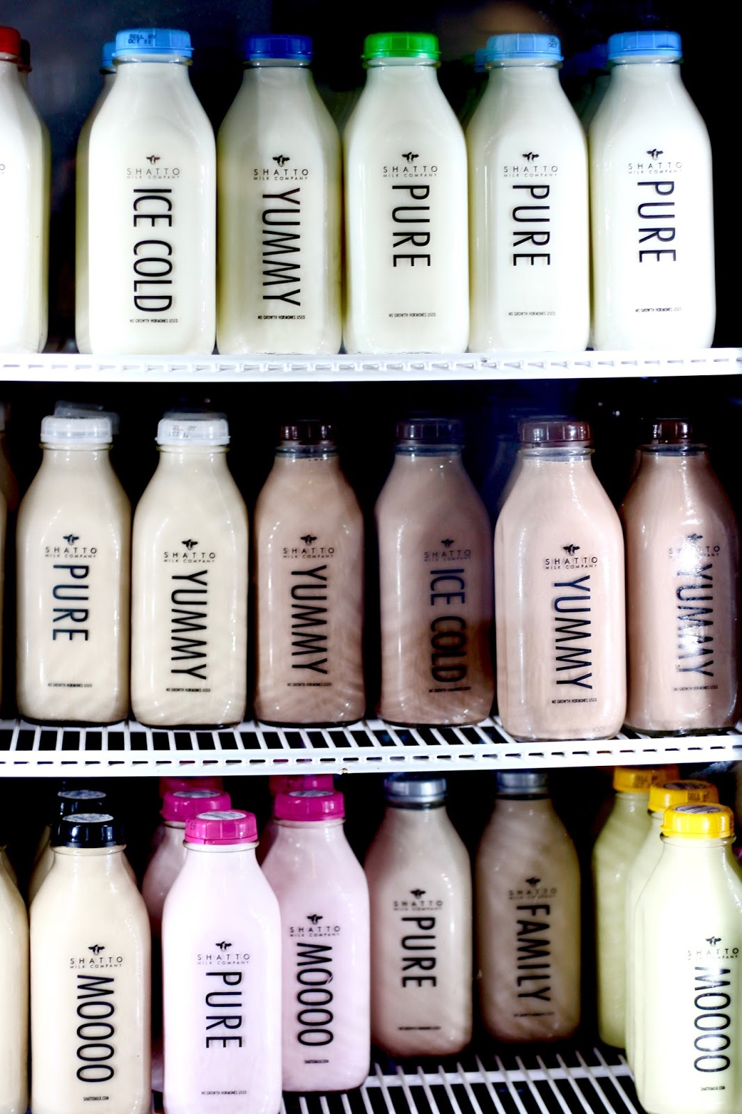 Our Day at Shatto Milk Farm