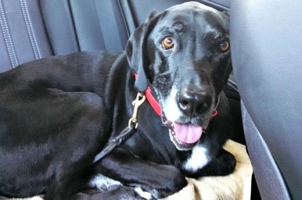 Muere un perro en el interior de un coche por un golpe de calor
