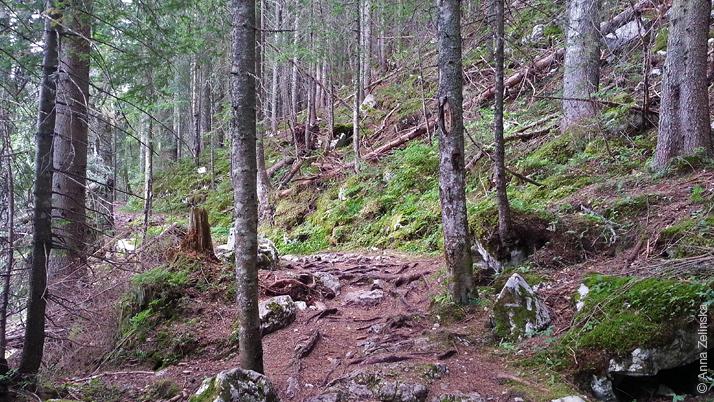 Прогулочная тропа по лесу, Дурмитор