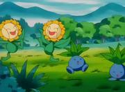 Sunflora y Oddish