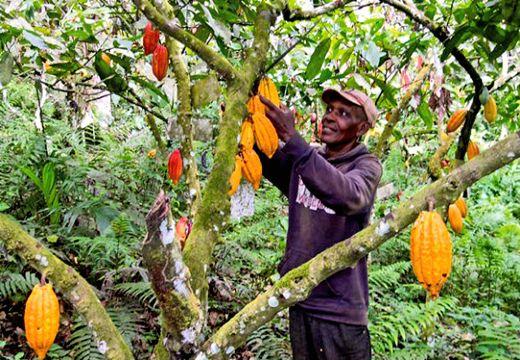 san-pedro-producteurs-de-cacao