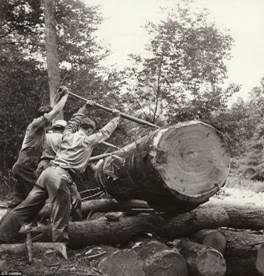 Canadian loggers