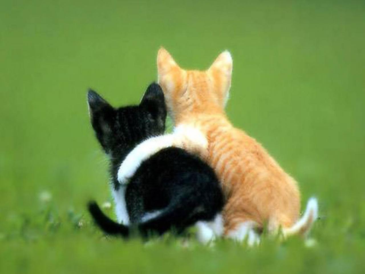 Video Game Kamu Kumpulan Foto Kucing Lucu Bergerak Imut Banget