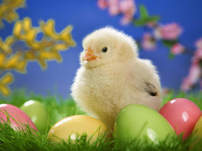 easter chick%2Bcopy - Happy Easter 2017 Greetings   pictures   images