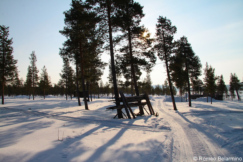 Reindeer Sledding Trail Outdoor Winter Activities in Sweden's Lapland
