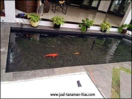 Specialis Mengerjakan Filter Kolam Ikan Ko'i