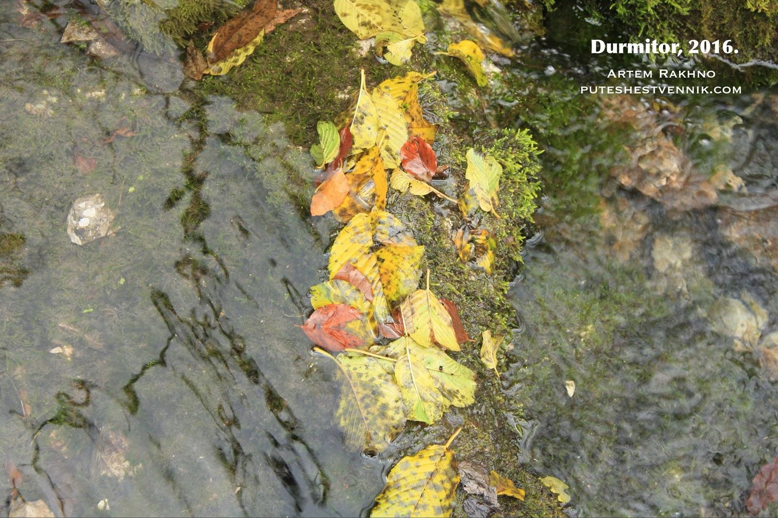 Листья в ручье