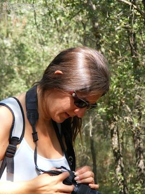 http://www.biodiversidadvirtual.org/insectarium/Pretesting-para-una-excursion-%28Punto-BV-Espacio-Pirineos-de-Graus%29-III-%283-de-3%29-img505510.html