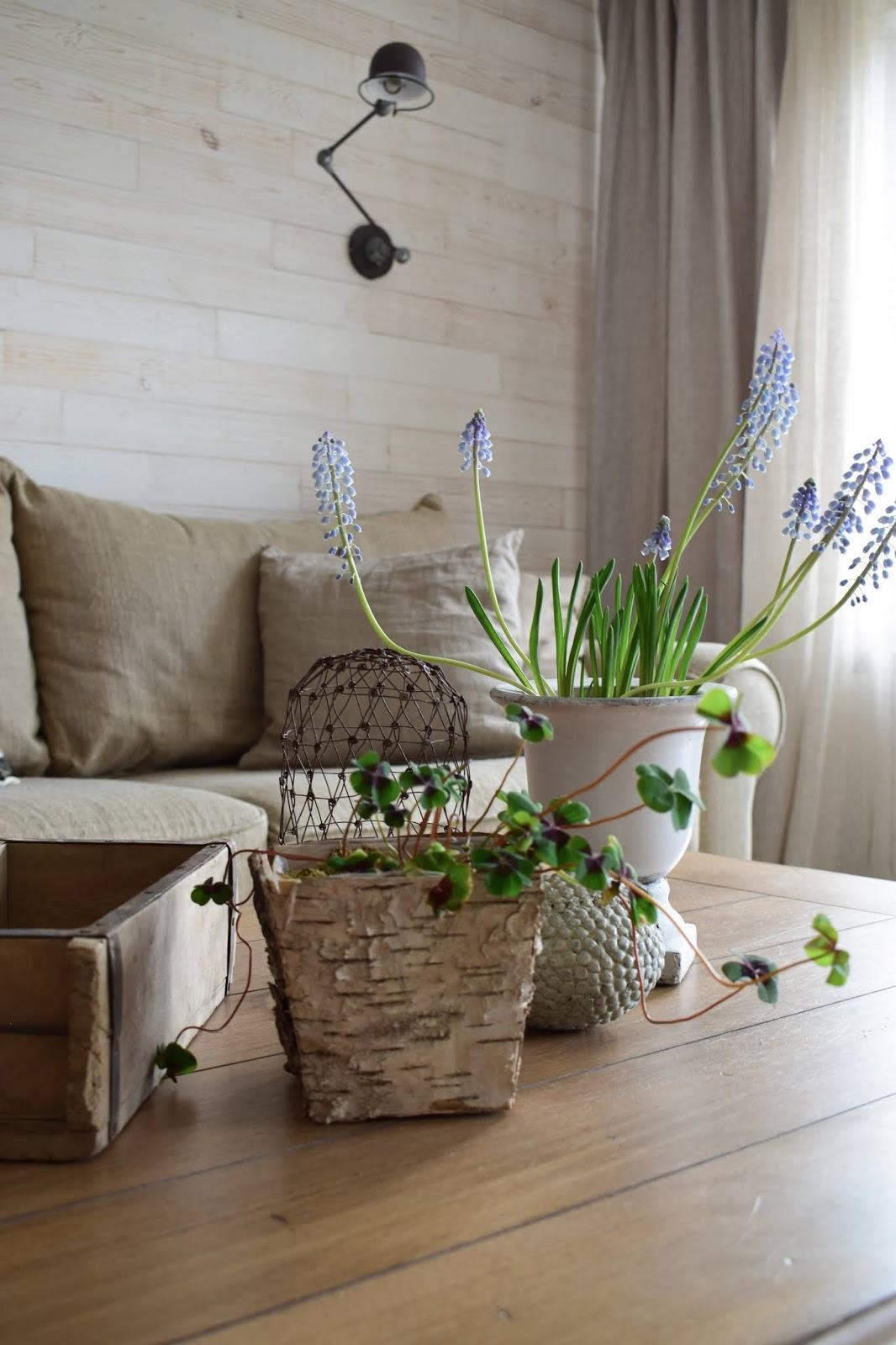 Wohnzimmer Tischdeko Dekoidee Deko Dekoration Frühling Perlhyazinthen Natur Naturmaterialen Rinde