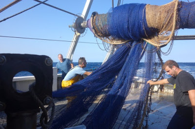 www.pescaturismomallorca.com echar las redes