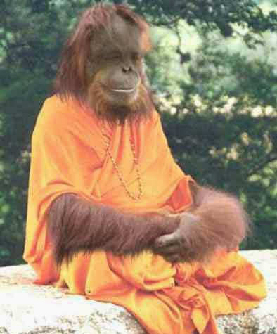 funny chimpanzee monk joke picture