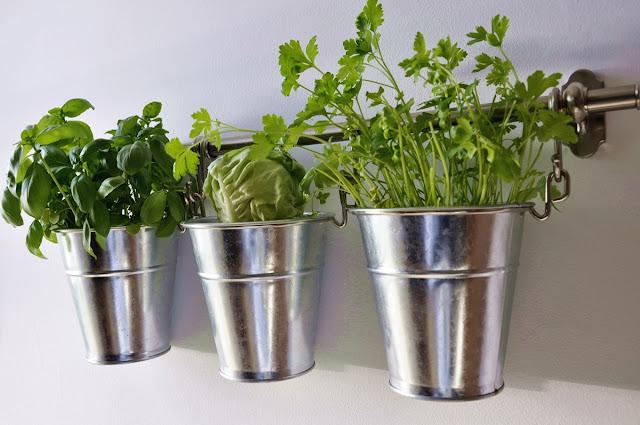 indoor garden, garden, ogród, domowy ogródek, herb, zioła,