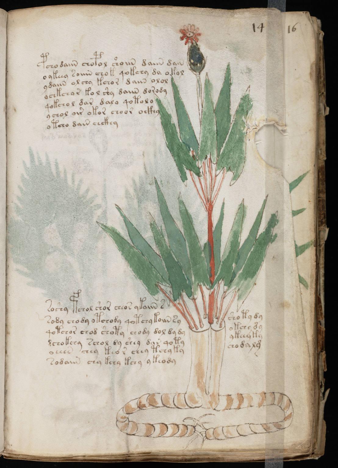 manuscrito027