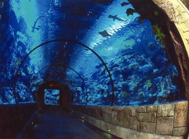 Atrações do hotel cassino Mandalay Bay em Las Vegas