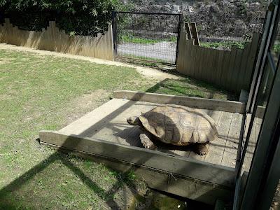 tortue-de-floride