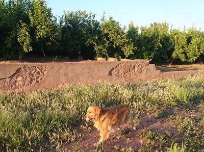 Det börjar bli dags att få en egen trädgård tycker Apelsinblomshund.