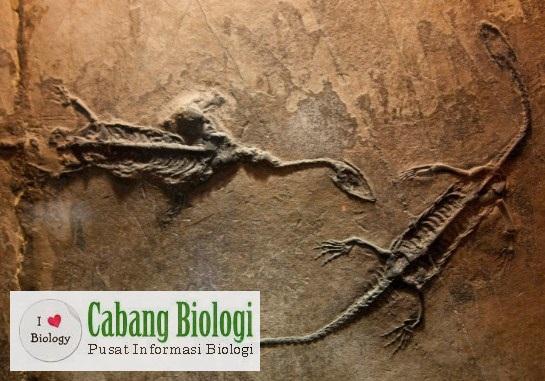 Petunjuk-petunjuk Evolusi