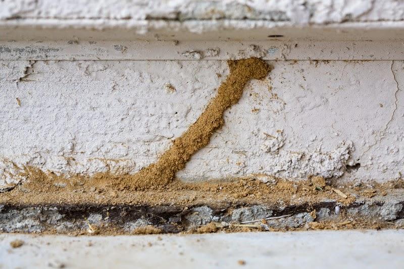 termites, exterminator, extermination, pest control, walla walla, dayton, milton freewater, ants, spiders, z pest control, mud tube, termite, 99362