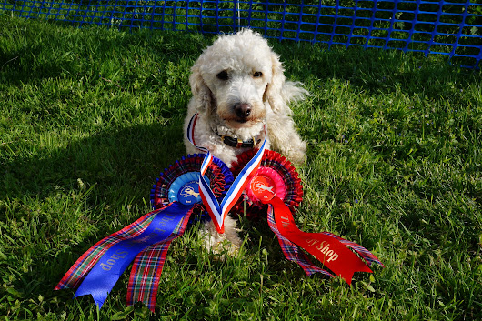 Orchard Agility Unaffiliated Show