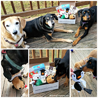 3 rescued dogs with toys and treats