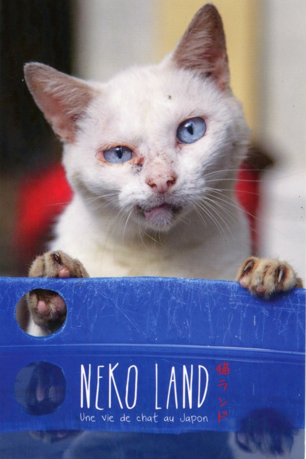 livre avec photos de chats