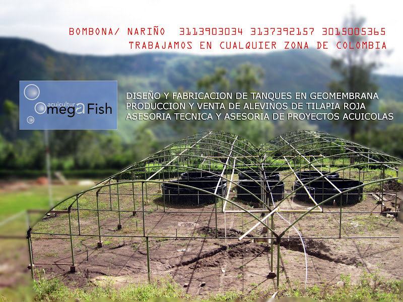 Asesoria en linea acuicultura en colombia for Manual de piscicultura tilapia