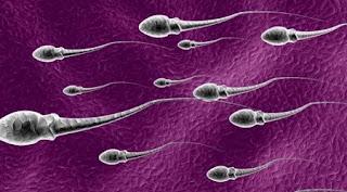 Inilah yang Akan Terjadi Pada Wanita Jika Menelan Sperma !