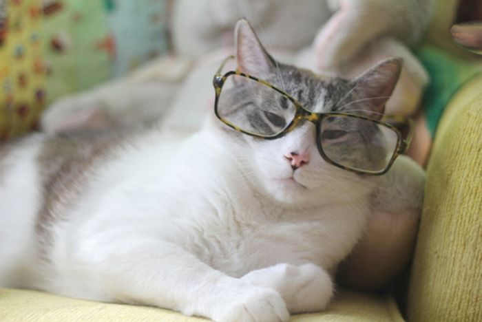 Cats with spectacles