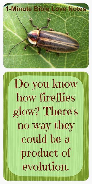 fireflies, creation, not evolution