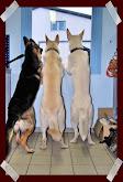Julvaxterna en dold fara for husdjuren