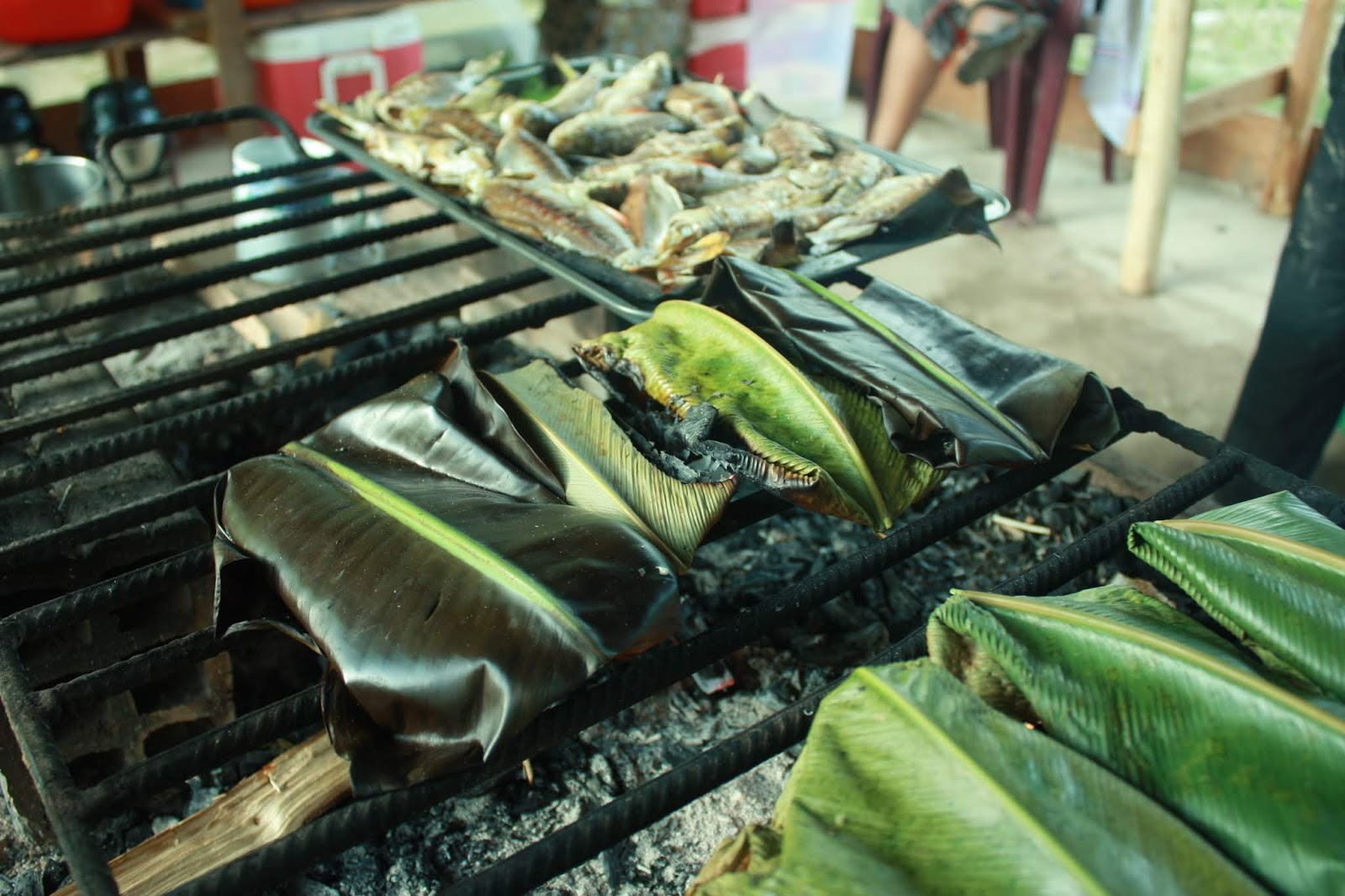 A dieta de cura xamânica,curas da amazonia, plantas