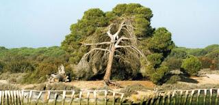Espacios Naturales-Patrimonio Mundial-Aznalcollar-Andalucia-Union Europea-España