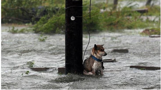 New Bill Makes It Illegal To Abandon Dogs In Natural Disasters
